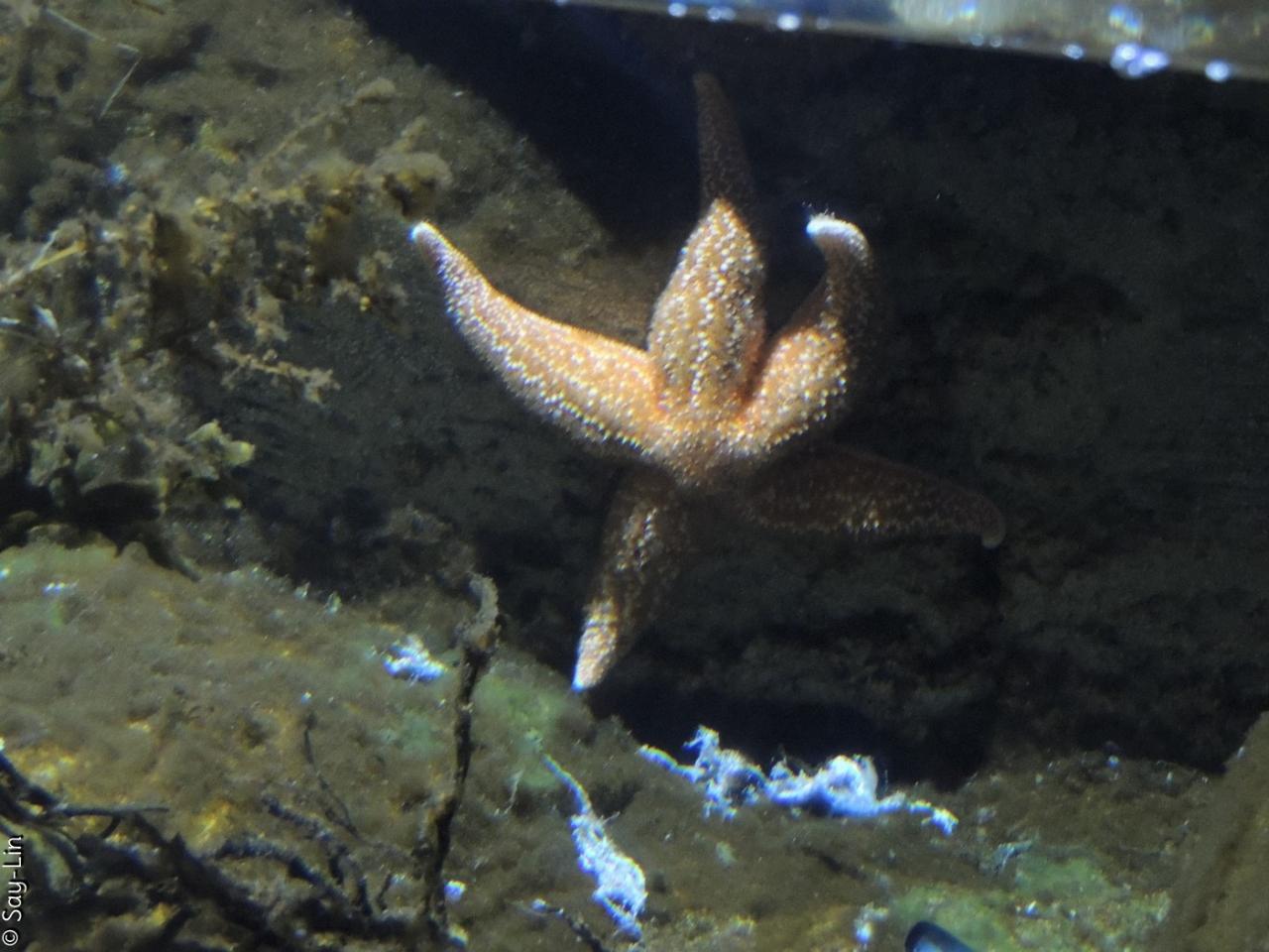 2016.07.05 - Aquarium LR (1)